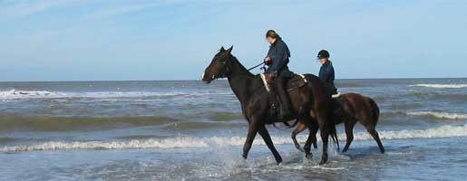 outer banks horses
